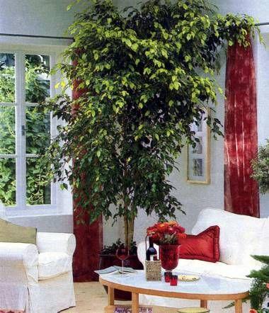 Velike sobne rastline