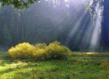 Ландшафт: поля и поляны - пространственное мышление