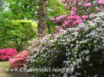 vrt slog: naravna, naravni vrt