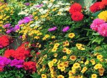 Летняя цветочная мозаика