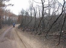 Litva bo pomagal Georgia obnovo zažgal gozd