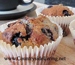 Blueberry (Borovnica) kolački polnozrnat