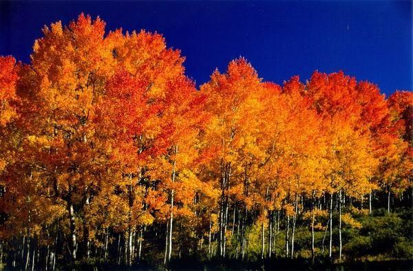 Aspen v jeseni