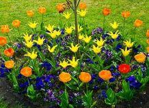 Маленькая клумба «изюминка» вашего сада