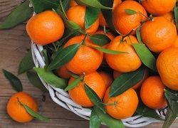 Мандарины домашние: польза и вред фрукта