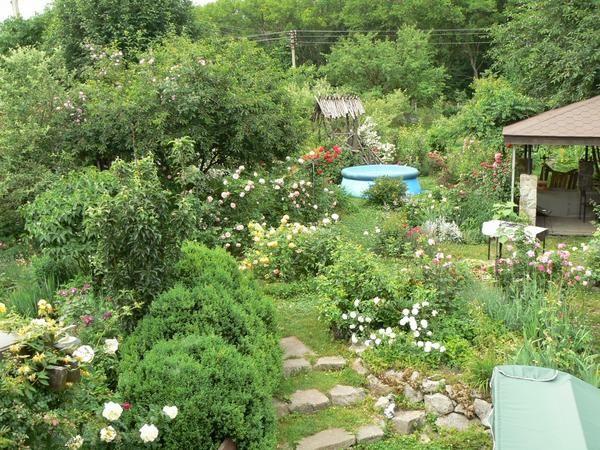 O vedere la grădină de vară