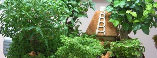 Mini vrt stanovanje