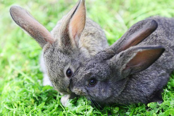 Кролики не самые простые для разведения животные