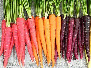 Плоды моркови разных цветов