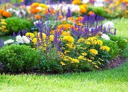 Многолетние цветы для клумб, благоухающие все лето