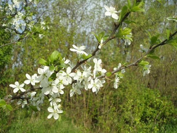 весна-все оживает