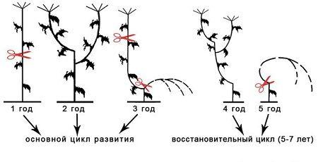 гидропоты для цветов