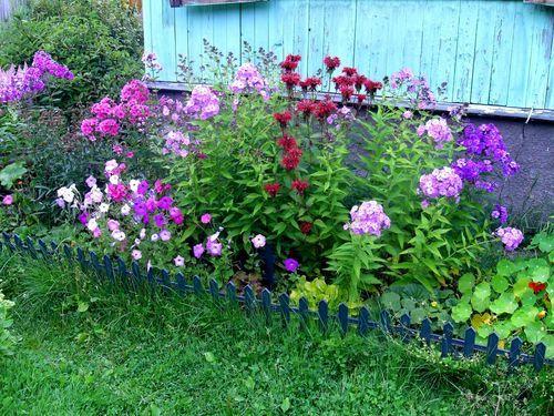 Sprednja vrt okoli hiše s cvetjem