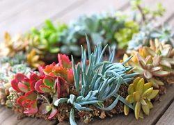 Nezahtevna rastlina za domačo in pisarniško fitosanitarna