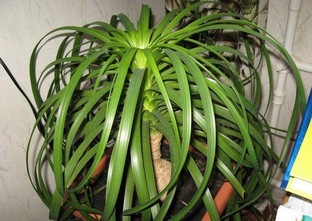 Skrb za sobne rastline