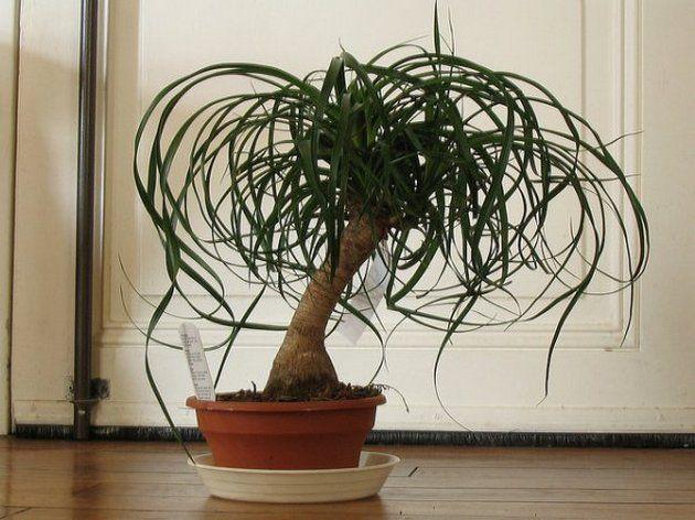 gnojenje rastlin