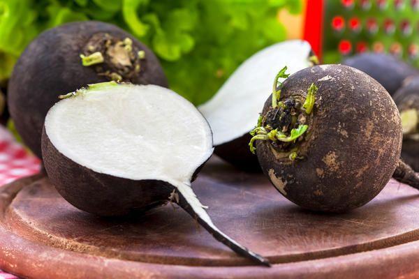 С точки зрения питательных и лечебных качеств наиболее ценной считается черная редька