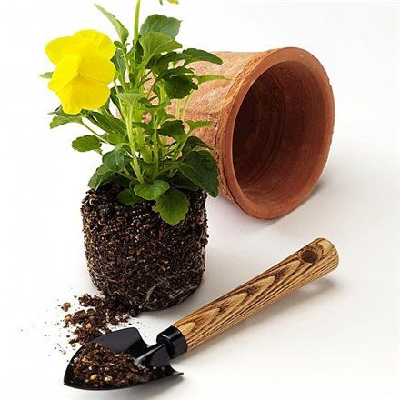 Če želite izvedeti, kako posaditi rože v loncih