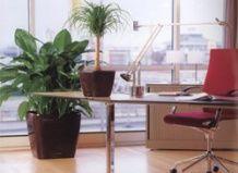 Офисные растения, стимулирующие мыслительную деятельность