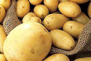 Visoko kakovost pridelka krompirja