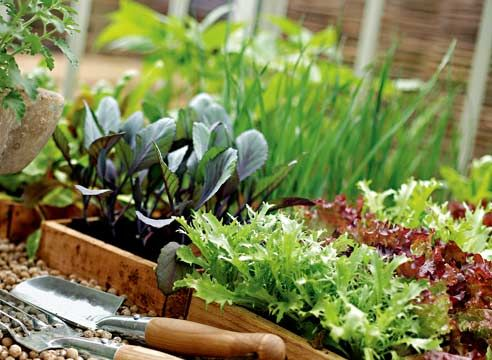 Рассада разных растений