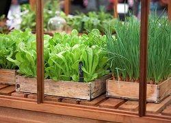 Zelenjavni vrt na okensko polico
