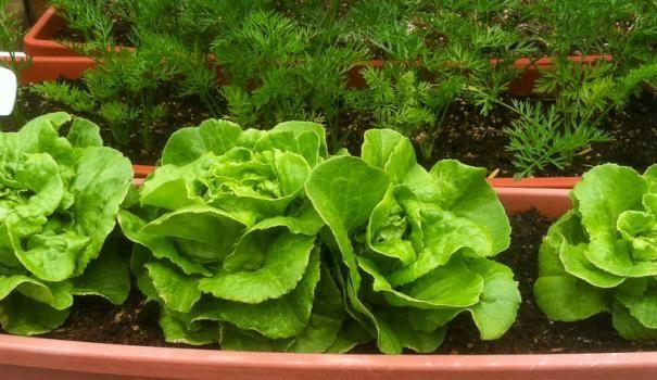 На подоконнике можно вырастить настоящий огород!