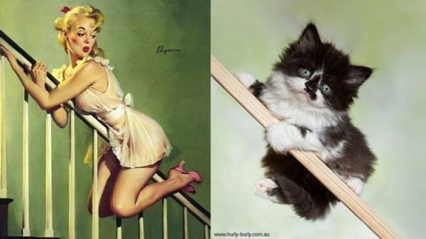кошка и...
