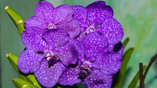 особенности цветка, его характеристики и разновидности