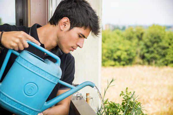 Не следует использовать для полива водопроводную воду прямо из-под крана