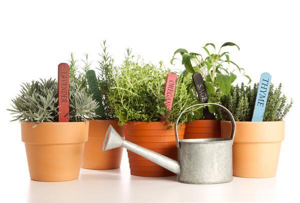 Najbolj škodljive rastline in suša in odvečno vlago
