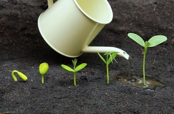 Интенсивность полива зависит от возраста растений
