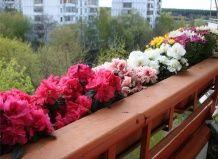 Ozelenitev balkon notranje opreme in dekoracijo oblikovanje balkonskega cvetja - ozelenitev vašem vrtu