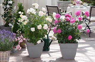 Vrtnice v notranjosti