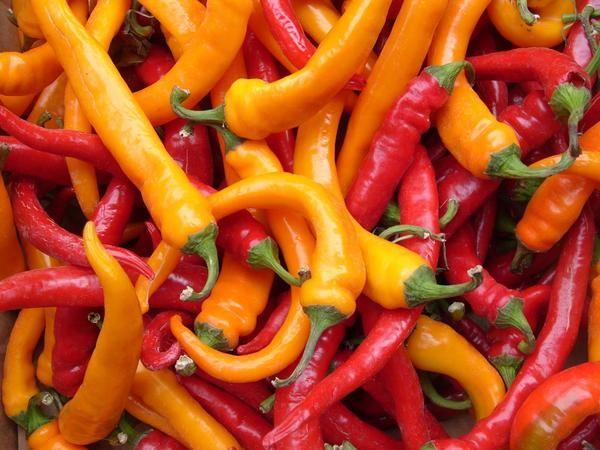 Pepper grenko - pikantno, grenko in uporabno
