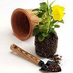 Presajanju rastlin. del 4