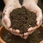 Presajanju rastlin. 2. del