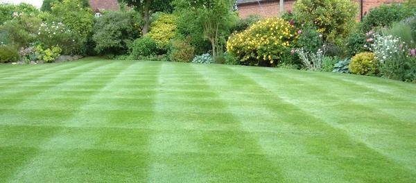 газон после стрижки