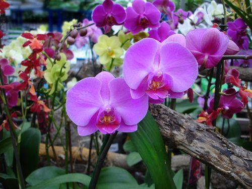 Почему орхидея вянет