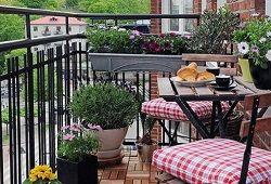 Ampelnye izberete rože, da okrasite balkon