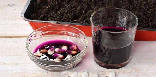 pol ure, da imajo semena v manganovega raztopine roza