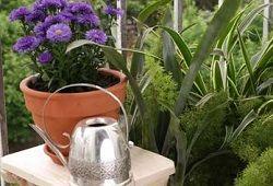 подкормка растений дрожжами