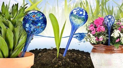колбы для полива цветов