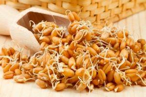 Pšeničnih kalčkov: koristi in škoduje
