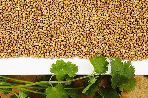 Зелень и семена кинзы