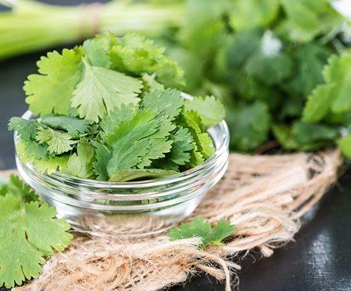 Листья кинзы богаты витаминами и микроэлементами