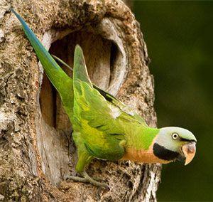 Попугай, опасный враг растений