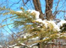 Priljubljene rastline (ideje za zimsko pokrajino