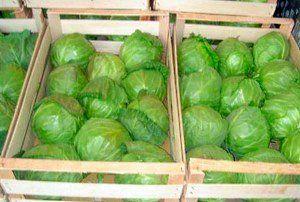 Shranjevanje zelje v škatlah