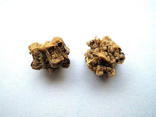 semena sladkorne pese